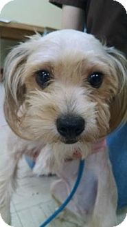 Terrier (Unknown Type, Small) Mix Dog for adoption in Daytona Beach, Florida - Muppet