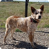 Adopt A Pet :: Colt - Sterling, CO