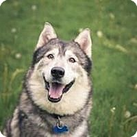 Adopt A Pet :: KIRBY - Seattle, WA