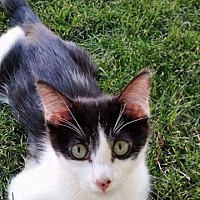 Adopt A Pet :: Johnny Depp - Corinne, UT