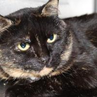 Adopt A Pet :: Lil' Debbie - Anderson, IN