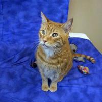 Adopt A Pet :: CONAN - Slinger, WI