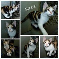 Adopt A Pet :: Buzz - Meadow Lake, SK