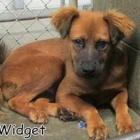 Adopt A Pet :: Widget - Georgetown, SC