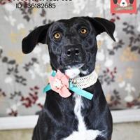 Adopt A Pet :: Tallahatchie - Gulfport, MS