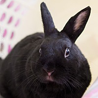 Adopt A Pet :: Blackberry - Montclair, CA