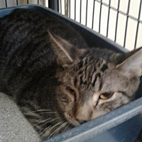 Adopt A Pet :: Carlos - Freeport, NY