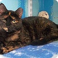 Adopt A Pet :: Odette - Huntington, NY