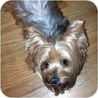 Adopt A Pet :: Nikki - Miami, FL
