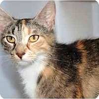 Adopt A Pet :: Renee - Markham, ON