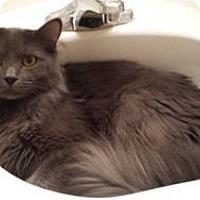 Adopt A Pet :: Anthony - Colorado Springs, CO