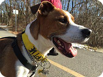 Hound (Unknown Type)/Bulldog Mix Dog for adoption in Wantagh, New York - Bubba