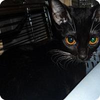 Adopt A Pet :: Columbine - Dallas, TX