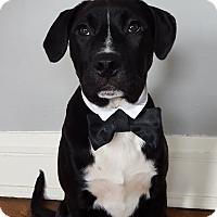 Adopt A Pet :: Georgie- Illinois - Wood Dale, IL