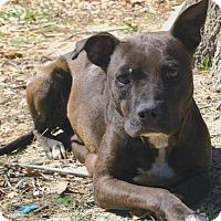 Adopt A Pet :: Tia - Staunton, VA