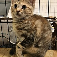 Adopt A Pet :: Lizzie - Hammond, LA