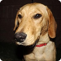Adopt A Pet :: Primrose - Oxford, MS