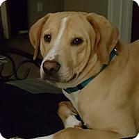 Adopt A Pet :: Trenton - Burleson, TX