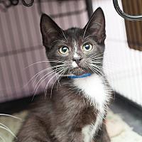 Adopt A Pet :: Erwin - Shelton, WA