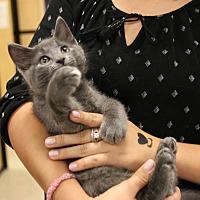 Adopt A Pet :: Challenger - Rochester, MN