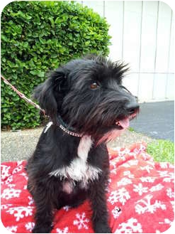 Terrier (Unknown Type, Medium) Mix Dog for adoption in Coral Springs, Florida - Sally