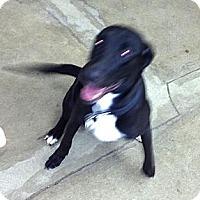Adopt A Pet :: Razor - Wahoo, NE