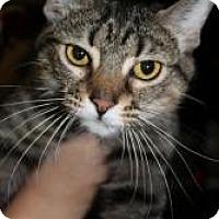 Adopt A Pet :: Lilly Bug - Justin, TX