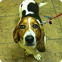 Adopt A Pet :: Gypsey - Northport, AL