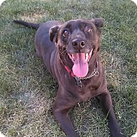Adopt A Pet :: Bindi - Emmett, MI
