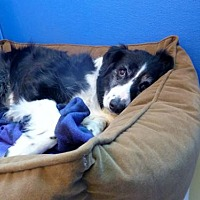 Adopt A Pet :: Katie - Diamondville, WY