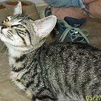 Adopt A Pet :: Abbey - Mexia, TX