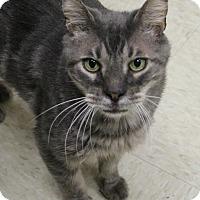 Adopt A Pet :: Ricky - Dunkirk, NY