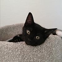 Adopt A Pet :: Harley - Modesto, CA