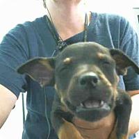 Adopt A Pet :: MURPHY - Tulsa, OK
