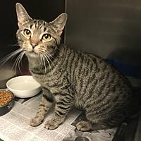 Adopt A Pet :: Nova - Newport, NC