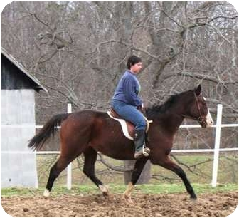Thoroughbred for adoption in Old Fort, North Carolina - King David's Son