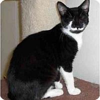 Adopt A Pet :: Josie - Richmond, VA