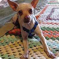 Adopt A Pet :: JASPER - AUSTIN, TX