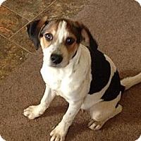 Adopt A Pet :: Izzy - Albany, NY