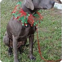 Adopt A Pet :: Meadow  **ADOPTED** - Eustis, FL