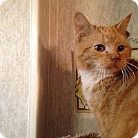 Adopt A Pet :: Bobby - Pace, FL