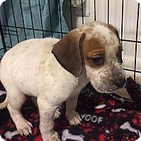 Adopt A Pet :: Fa - Westminster, CO