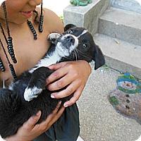 Adopt A Pet :: Tipper - Cincinnati, OH