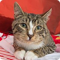Adopt A Pet :: Thumper - New York, NY
