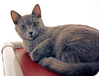 Calico Cat for adoption in Harrisonburg, Virginia - Cayenne Pepp