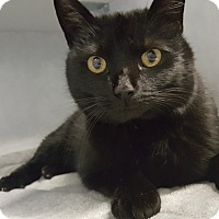 Adopt A Pet :: Whoopie - Cody, WY