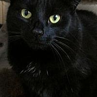 Adopt A Pet :: Queen Latifah - Richboro, PA
