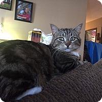 Adopt A Pet :: Thomas - Winnipeg, MB