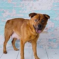 Adopt A Pet :: Sallie Chow - Denver, CO