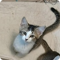 Adopt A Pet :: Ladue - Colorado Springs, CO
